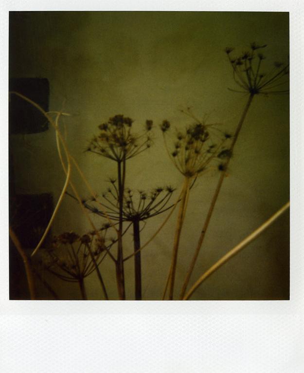 Dead Flowers by A-Sullen-Girl